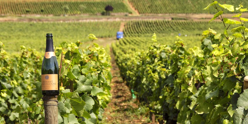Private Day Trip to Burgundy from Paris
