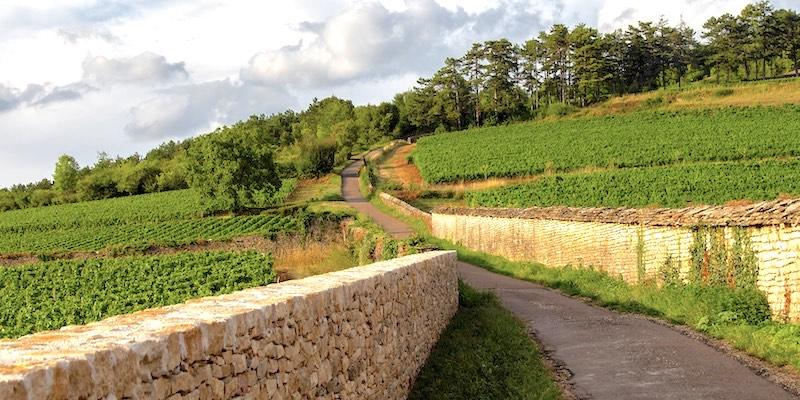 Burgundy Vines & Village