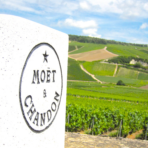 Wine-Tasting Trip to the Champagne Region