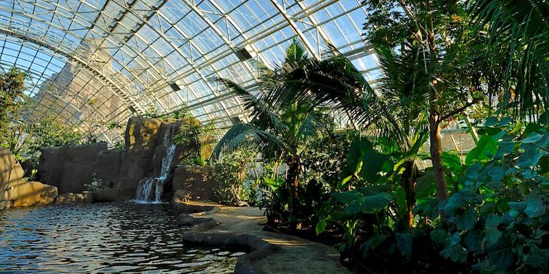 Amazon-Guyana Biozone