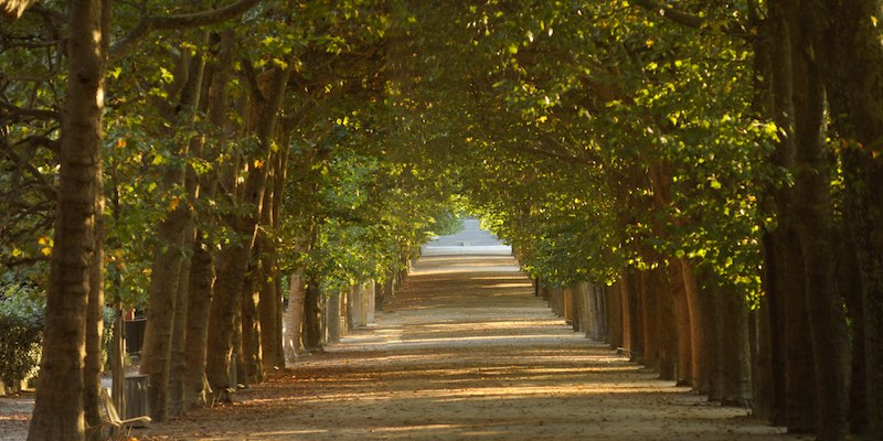 Trees Jardin des Plantes