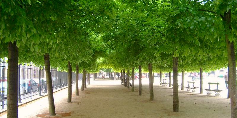 Trees in Paris