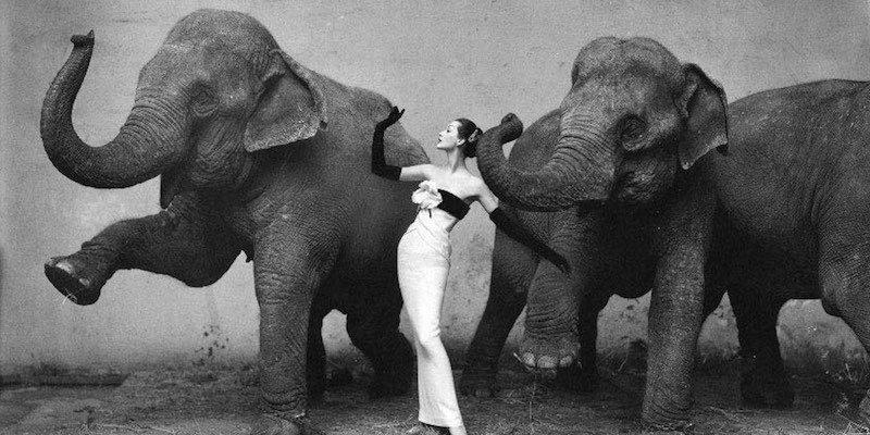 Dovima with Elephants