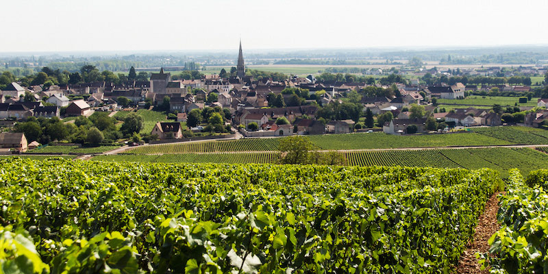 Visiting French Wine Regions