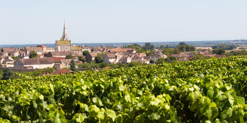 Burgundy Vines & Village