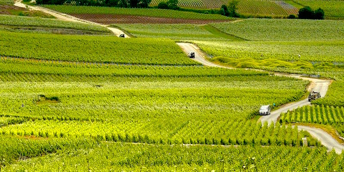 Day Tours from Paris to Champagne Country