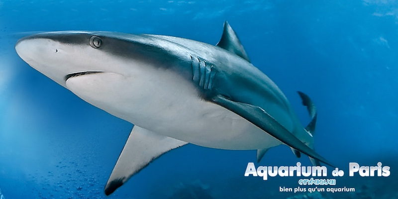 Cineaqua Aquarium