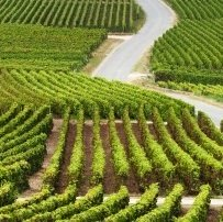 Wine-Tasting Trip to the Champagne Regio