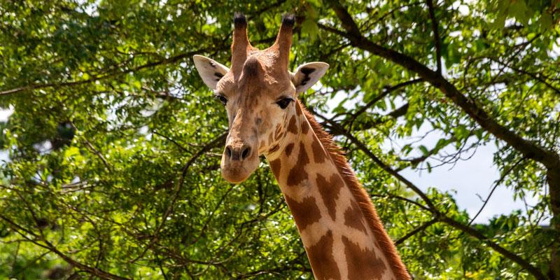 The African Savanna, photo by Mark Craft